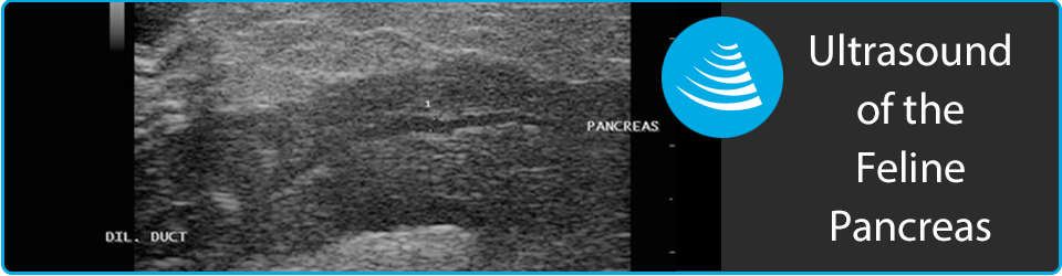 Ultrasounding the Feline Pancreas