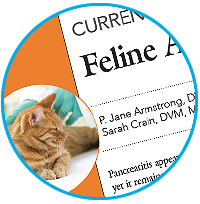 Feline Pancreatitis Article